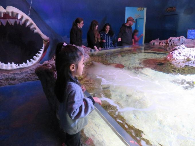 工夫された海洋生物展示