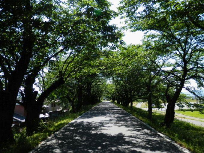 桜の時期には多くの人がやってきます。団体旅行の観光バスも見かけます。(撮影時は新緑の季節)