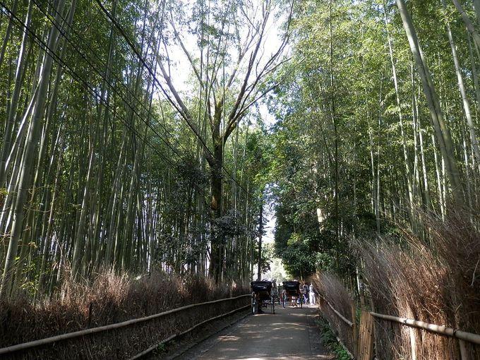 平安貴族も聞いた竹の音に京都らしさを感じ、日本を感じる・・竹林の道