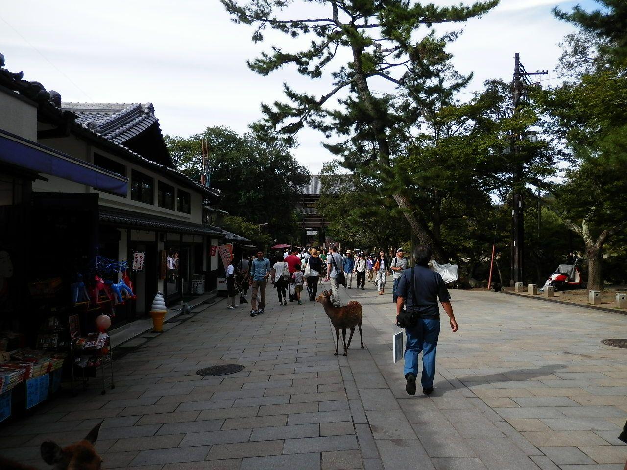 大仏や金剛力士像の荘厳さと鹿のかわいさが人気の、奈良県屈指の観光地「東大寺」