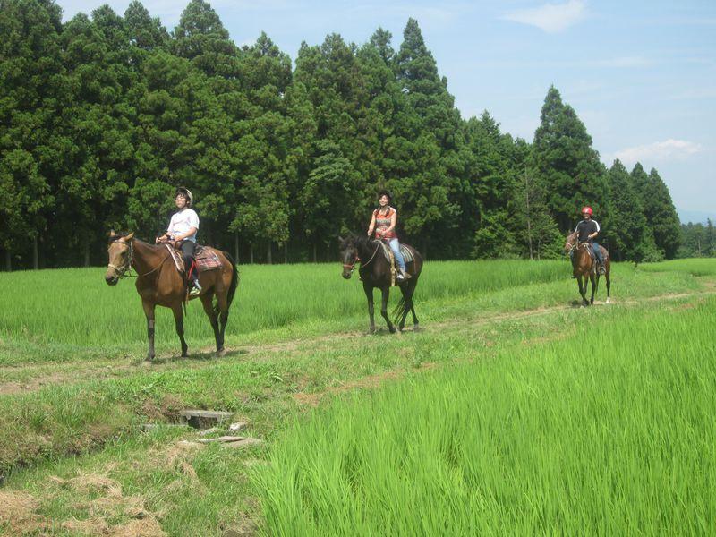 御殿場、富士のふもとで乗馬体験!ビッグマウンテンランチ