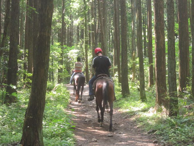 林の中で速足(はやあし)の練習にドキドキ