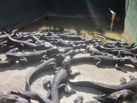 野生植物・動物の宝庫!エバーグレーズ国立公園(フロリダ)