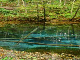 北海道パワースポット「神の子池」癒やしの水パワーで体内浄化を