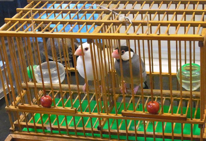 【挽面】と【小鳥占い】に挑戦