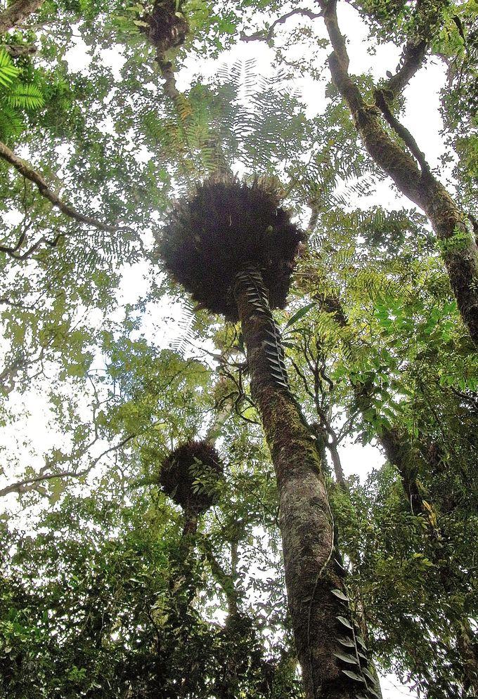 世界最古の熱帯雨林!