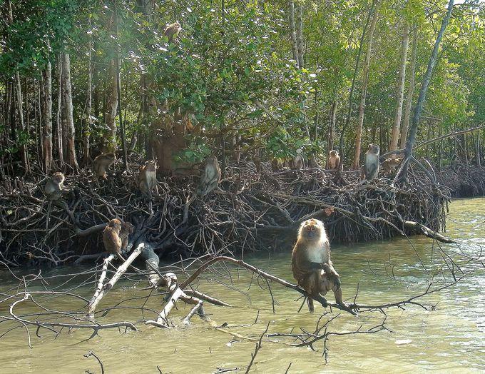シーカヤックで猿に遭遇