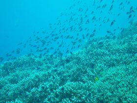 手つかずの自然の楽園がここに!タイ・ランタ島でシュノーケル&洞窟遊泳