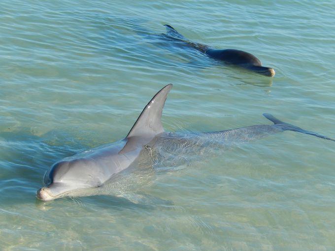 海洋生物が仲良く共存する海域