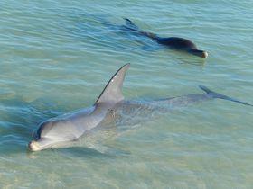 パース&西オーストラリア州観光でおすすめ10選!イルカに会えるホテルも…