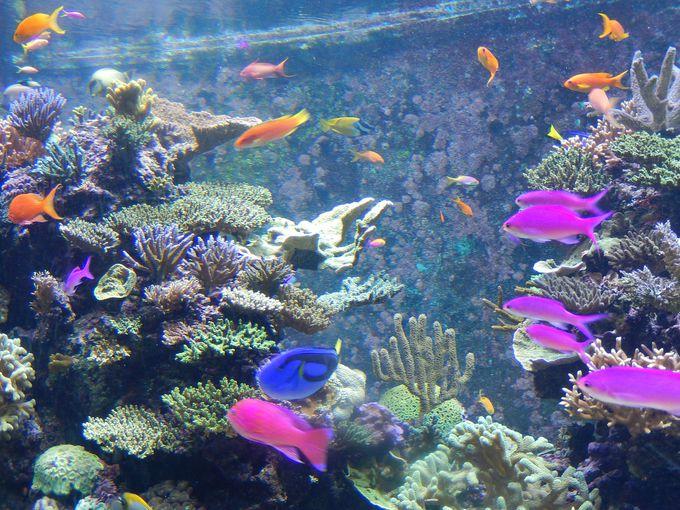 熱帯魚に癒やされる!