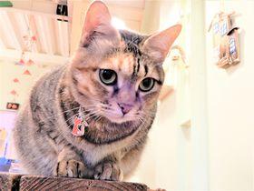 台湾猴硐の猫カフェ「HIDE&SEEK CAFE」ニュウニュウとほんわかティータイム♪