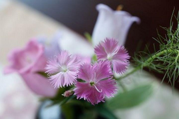 日本の四季を花で表現