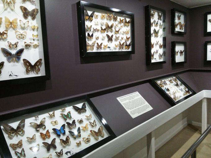 標本で見る世界の蝶と蛾