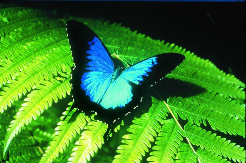 1500種類の蝶が飛び交う温室内
