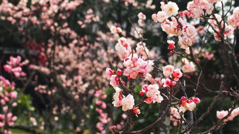 京都駅から歩いてすぐ!渉成園(枳殻邸)で季節折々花ごよみ