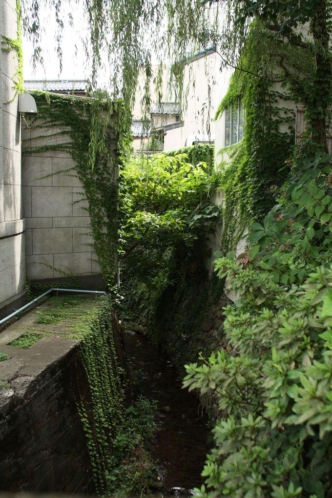 レトロ建築が金沢の文学の拠点に