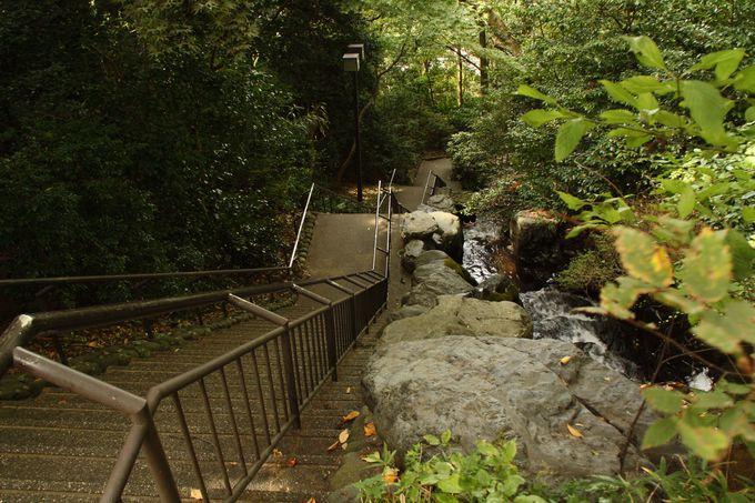こんなところにいきなり急な階段と滝が!?
