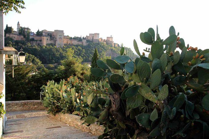 知る人ぞ知る展望台、アルハンブラと自然のコントラストが壮観!