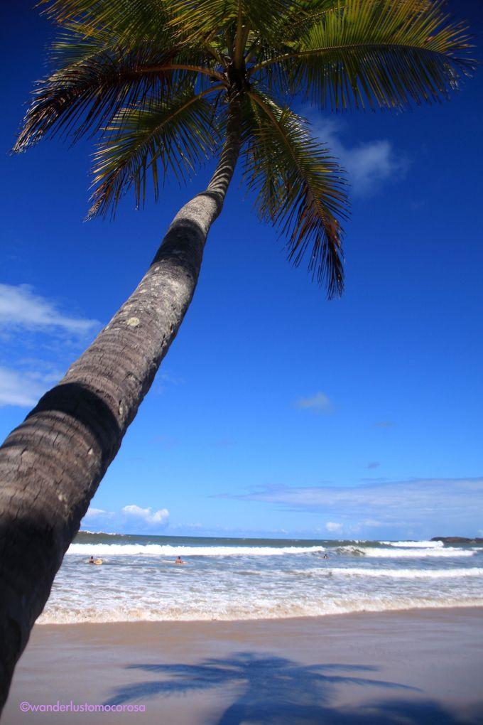 サーフィン好きにはたまらない、初心者も経験者も満足するビーチ
