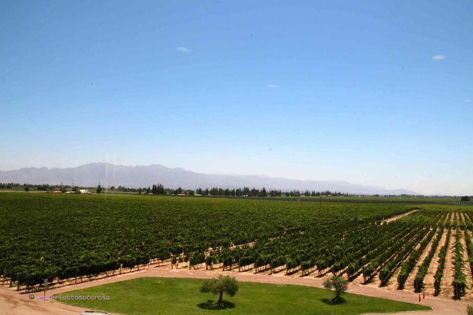 アンデス山脈を望む、広大な敷地にあるワイナリー。どこのワインも試飲してみたくなるはず!