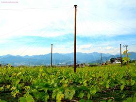 世界も認めた「甲州ワイン」!名産地・勝沼で個性派ワイナリーを巡ってみよう!