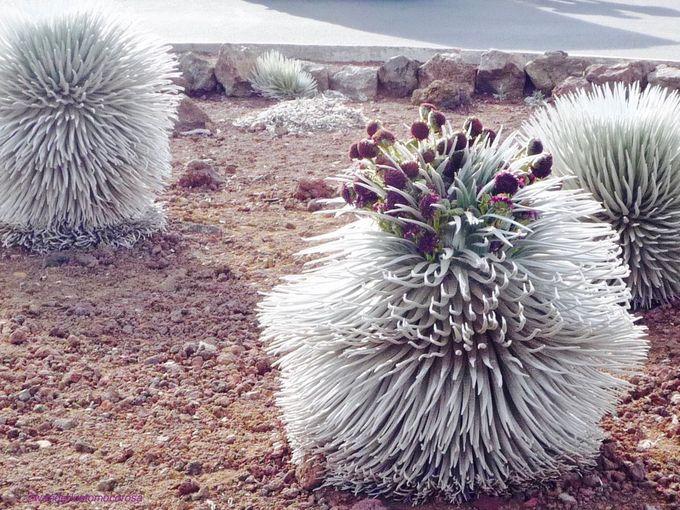 珍しい植物との一期一会も!