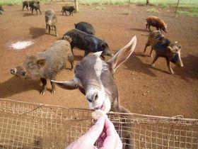 アロハな動物がお出迎え?!カウアイ島「キロハナ」で大自然にたわむれよう!