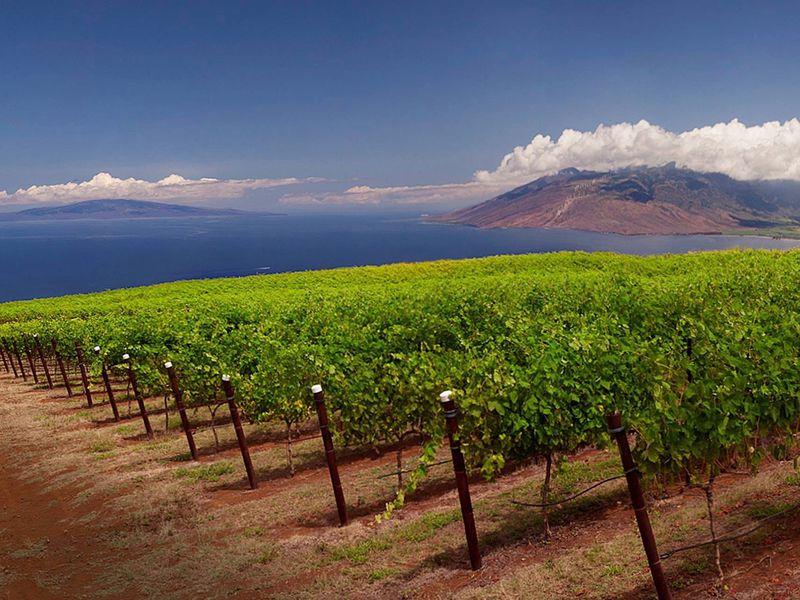 マウイ島、ハレアカラ山周辺の美味しくって意外な観光スポット!