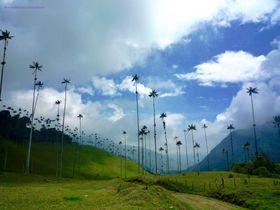 世界一高いヤシの木を見にコロンビア「ココラ渓谷」へ行こう!