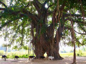 仏陀ゆかりの地!インド「ブッダガヤ」1日観光モデルコース