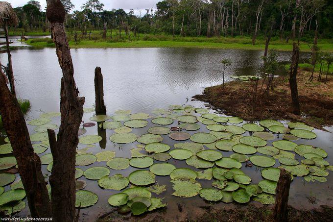 野生のサルや珍しい植物まで!熱帯雨林がすぐそこ