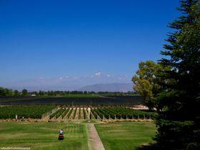 極上のワインを味わおう!アルゼンチン・メンドーサのワイナリー3選