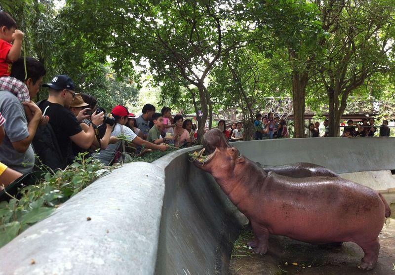 タイの穴場スポット!バンコク・ドゥシット動物園でエサやり体験