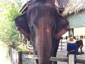 タイの有名観光地に泊まろう!サムプランリバーサイドで象乗り体験も