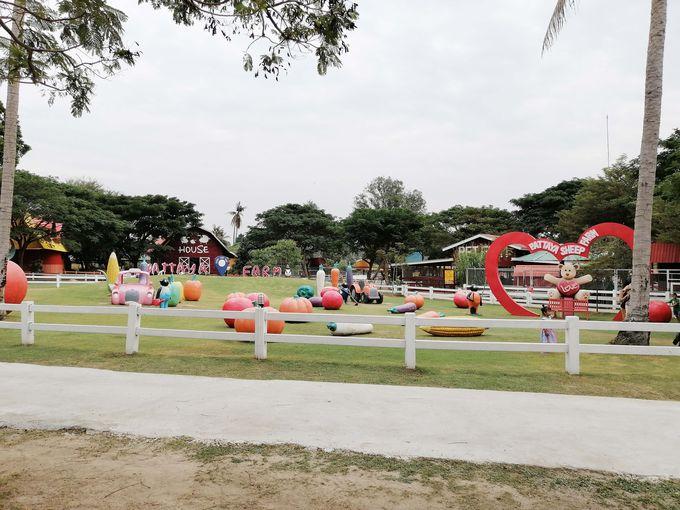 パタヤ・シープ・ファーム(Pattaya Sheep Farm)