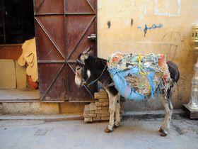 全く違う風景に出会える、北モロッコの世界遺産二都市を巡る旅!