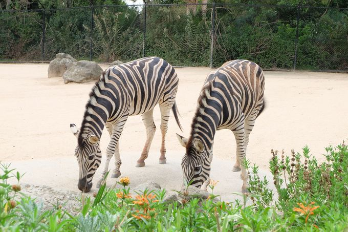 22ヘクタール!?一日中楽しめる広大な動物園!