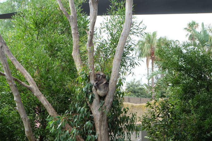 6.メルボルン動物園