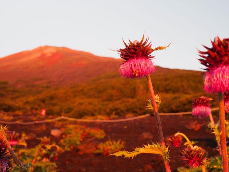 文化遺産としての価値を味わう、ひと味違った富士山登拝