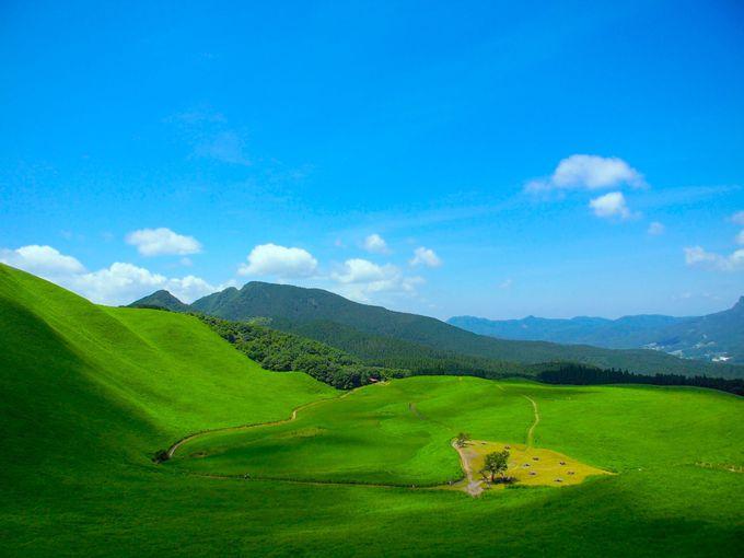 秋が本番「曽爾高原」で金色の野に降りたつべし!