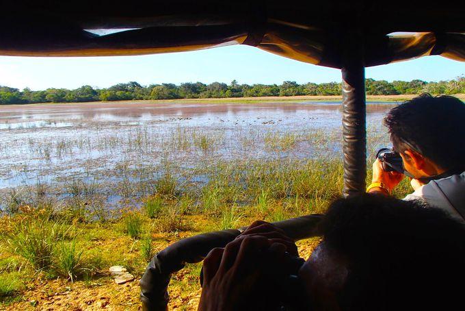 ウィルパトゥ国立公園でサファリ体験