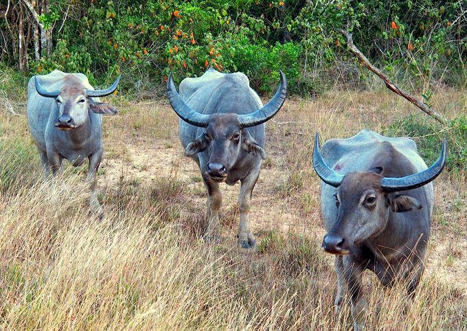 9. サファリツアーも体験できる「ウィルパトゥ国立公園」