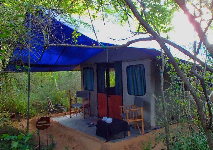 冒険のスタートはキャンプ・ホテル「Big Game Camp Wilpattu」から