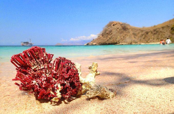 世界で一番美しいコモド島の「ピンクビーチ」