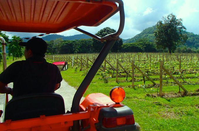 ワイナリーにアジア最大の牧場など観光農園がめじろ押し