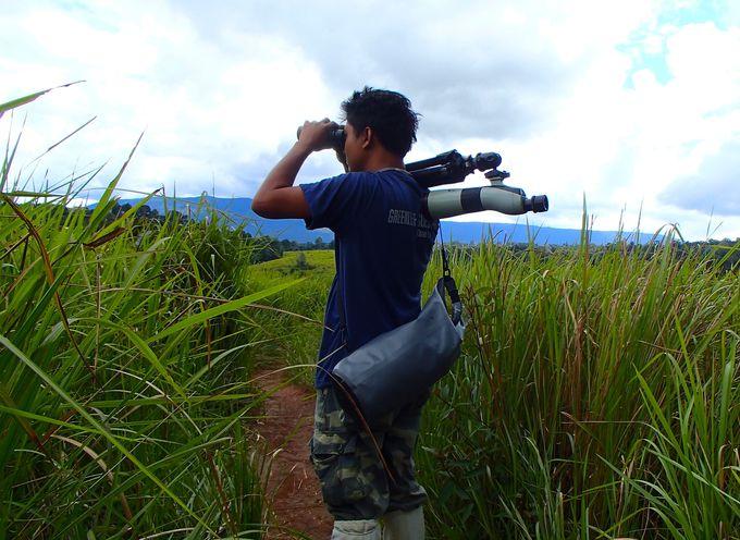 動物探しのプロフェッショナル!ガイドとともにジャングルを歩く