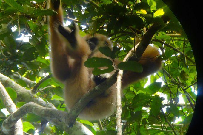 豊かな自然と数多くの哺乳類や鳥類が暮らす「カオヤイ国立公園」