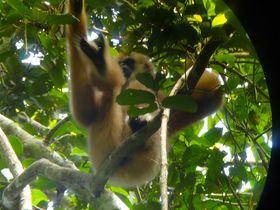首都からたった3時間で自然遺産!タイ「カオヤイ国立公園」