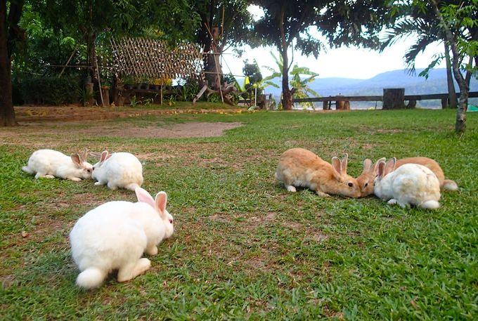 広い庭いっぱいにかけ回るウサギに癒やされて